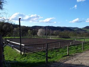 Pferdehof Steinberger Zaun, Natur, Wiese